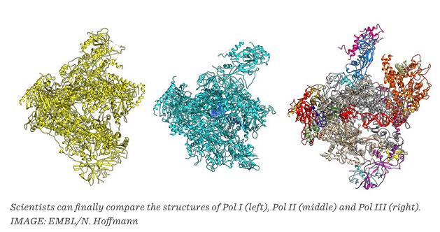 ARN pol III