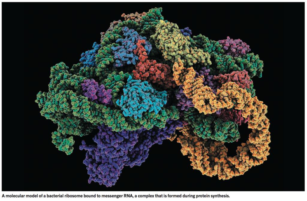 Ribosome et RNA